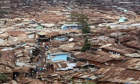 How to grow food in a slum: lessons from the sack farmers of Kibera   sustainablity   Scoop.it