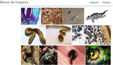 Imágenes gratuitas sobre Ciencias para descargar y usar en tus trabajos | Estrategias educativas innovadoras | Scoop.it