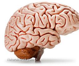 Study shows inactivity changes the brain, has harmful health ...   Digital brain   Scoop.it