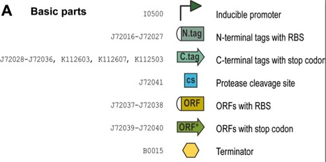 2ab assembly: a methodology for automatable, high-throughput assembly of standard biological parts | SynBioFromLeukipposInstitute | Scoop.it