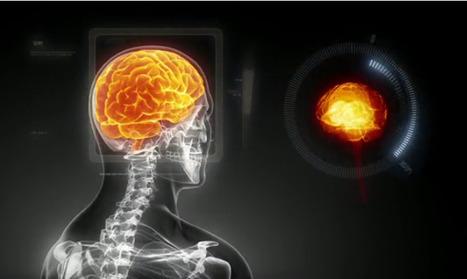 Crea y aprende con Laura: The Human Brain Project. Detallado atlas 3D de un cerebro humano | jhnunez | Scoop.it