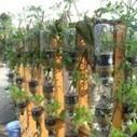 Aquaponie : les poissons font pousser des légumes ! | Des 4 coins du monde | Scoop.it