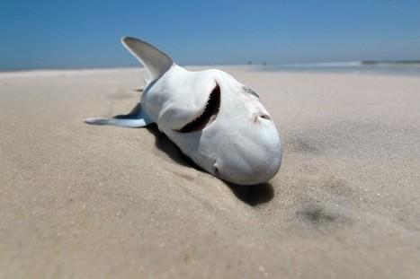 Pollution : le plastique tue 1,5 million d'animaux par an | Toxique, soyons vigilant ! | Scoop.it