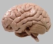 Wat doet stress in de hersens van kinderen? | Ouders Online | OUDERAVONDEN en Bijeenkomsten | Scoop.it