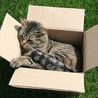 Animal Empathy & Natural Pet Care