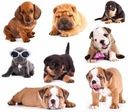 Dog Breeds: Should Dog Diets Be Breed-Specific?   Hearty Bites Blog   Random   Scoop.it