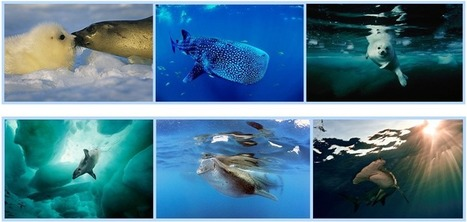 Saving The Ocean Through The Lens | Mycamera Blog | Realms of Healthcare and Business | Scoop.it