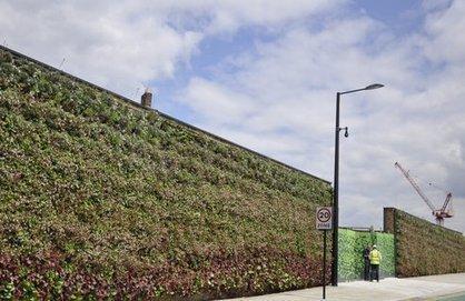 New Green Vertical Wall Pops Up in London's King's Cross | Vertical Farm - Food Factory | Scoop.it