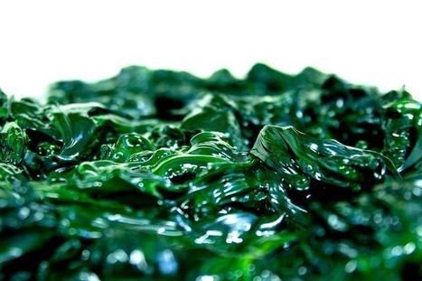 Concarneau. La première micro-algue imprimée en 3D - Finistère économie | Innovation - Transfert de technologies | Scoop.it