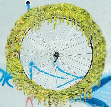 Planting Spinach on a Vertical Garden Made From Bicycle Wheels | Urban Gardens | environnement | Scoop.it
