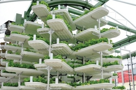 Could vertical farms feed the world? - eco-business.com | Cityfarming, Vertical Farming | Scoop.it