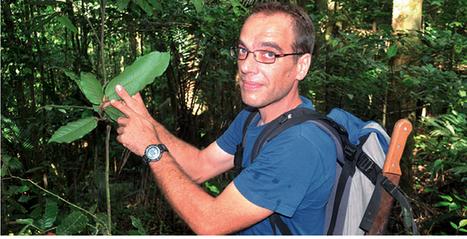 Jérôme Orivel et la plante qui a servi aux expérimentations, sur la ... - FranceGuyane.fr | CNRS Guyane | Scoop.it