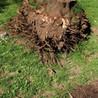 J & J Affordable Stump Grinding