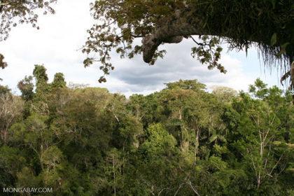 Study: Drought impedes tree growth, shuts down Amazon carbon sink | Rainforest EXPLORER:  News & Notes | Scoop.it