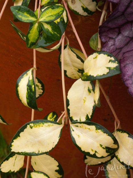 Plant Emergencies | Annie Haven | Haven Brand | Scoop.it