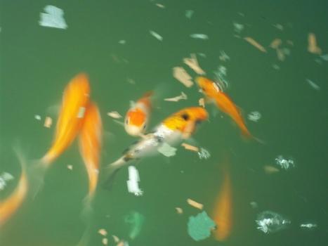 CCRES: Chinampa Aquaponics   Algae   Scoop.it