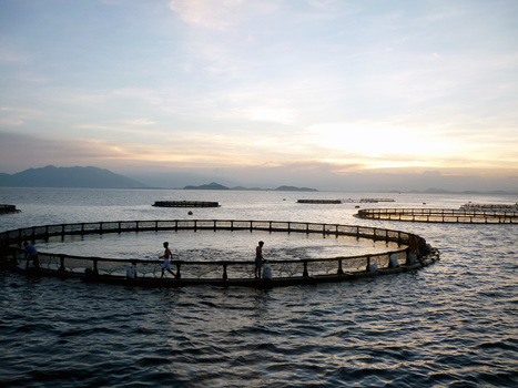 INDIA: Flashy ribbons to help protect aquaculture farms too | Viet Linh | Scoop.it