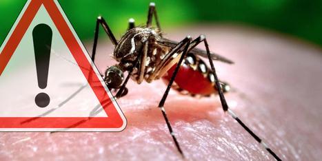 Le virus Zika va se propager en France avec l'arrivée du moustique tigre | Toxique, soyons vigilant ! | Scoop.it