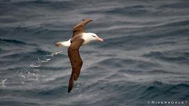 MV FRAM EXPEDITION BLOG: ONWARD TO STANLEY | Arctique et Antarctique | Scoop.it