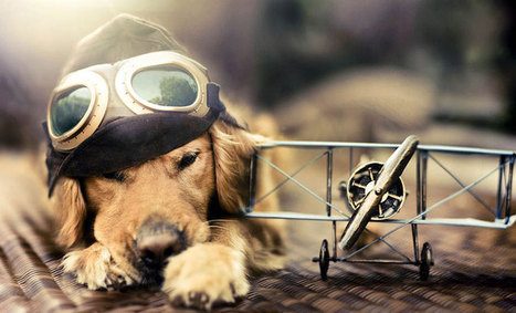 Pet Photography: quando diventa arte e spopola nel web | Idee in Transito | Creativity, Design & Adv | Scoop.it