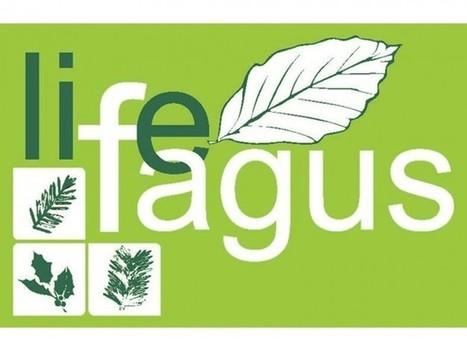 Patto di comunità in linea con il progetto FAGUS - Labsus   Conetica   Scoop.it