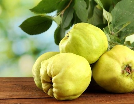 Quince – How to Use This A Powerful Fruit and Natural Remedy | eCellulitis | Healthy Food Tips & Tricks | Scoop.it