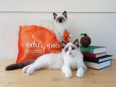 Five-Minute Film Festival: The Best Cat Videos for Educators | Technology to Teach | Scoop.it