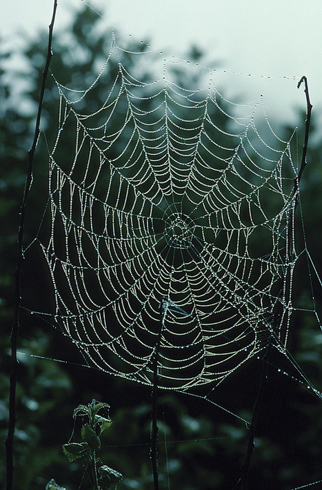 Autumn dew brings spider webs into plain view (photos) | The Miracle of Fall | Scoop.it