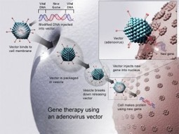 Biopharmconsortium Blog » Blog Archive » Is gene therapy emerging from technological prematurity? | biotech, pharma, molecular diagnostics | Scoop.it