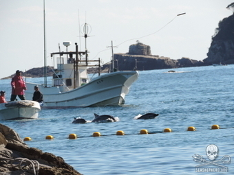 Taiji and the Drive to Extinction - Sea Shepherd Conservation Society | E