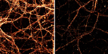 Neurons constantly rewrite their DNA to store information | KurzweilAI | Longevity science | Scoop.it