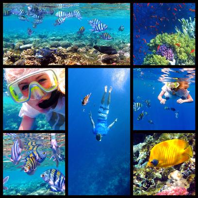The Snorkel Shack | The Snorkel Shack | Scoop.it