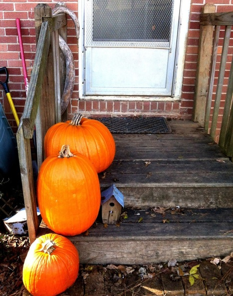 Plant Preview: After - Thanksgiving Pumpkins | Annie Haven | Haven Brand | Scoop.it