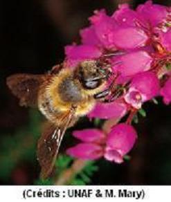 Les néonicotinoïdes associés à des risques pour les abeilles… et la santé humaine | Toxique, soyons vigilant ! | Scoop.it