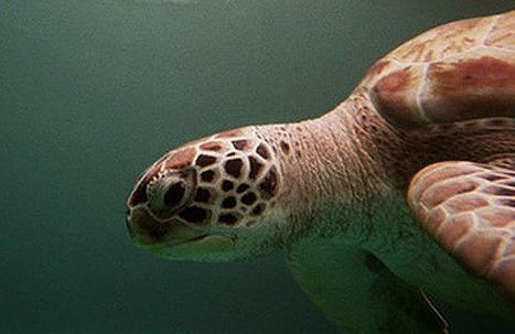 Más de 150 especies protegidas, afectadas por proyectos de hidrocarburos en España | Planeta Tierra | Scoop.it