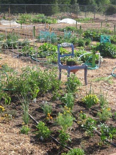 Garden Groupies | Payson (AZ) Roundup | CALS in the News | Scoop.it