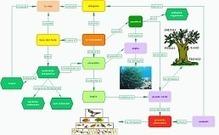 Métodos y estrategias de la gestión del conocimiento aplicadas a los mapas conceptuales: innovación en las tecnologías del aprendizaje | paprofes | Scoop.it