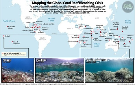 The Latest Coral Bleaching Event Spreads Worldwide | InsideClimate News | Lorraine's Environmental Change &  Management | Scoop.it