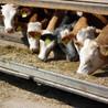 AMR - Antibiotico resistenza e alimenti di origine animale