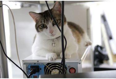 Au Japon, une entreprise adopte 9 chats pour assurer le bien-être de ses salariés | Farfeleusement Vôtre | Scoop.it