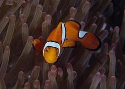 Carbon dioxide is 'driving fish crazy' | CLIMATE CHANGE WILL IMPACT US ALL | Scoop.it