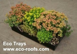 Eco-Roofs advertiser press release - Greenroofs.com | GreenRoofs | Scoop.it