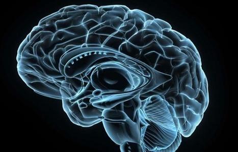 N'utilise-t-on vraiment que 10% des capacités de notre cerveau? | Insertion professionnelle Troubles Dys | Scoop.it