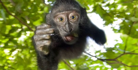 ARKive - Discover the world's most endangered species | Technology in Education | Scoop.it