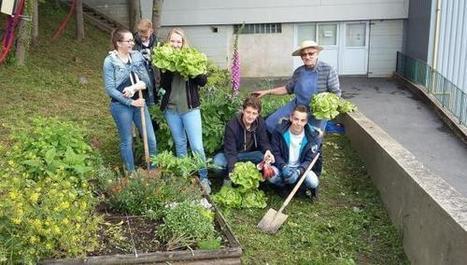 La première récolte du jardin solidaire de Mariette offerte aux Restos du cœur - La Voix du Nord | Actualité lycéenne  Lycée Mariette | Scoop.it