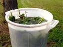 Purins de plantes et autres décoctions | Potager & Jardin | Scoop.it