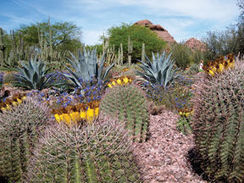 Desert Gardener: Creating art in the Moody Garden | CALS in the News | Scoop.it