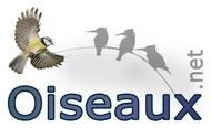 Les oiseaux du Cameroun | Cameroun ornithologie | Scoop.it
