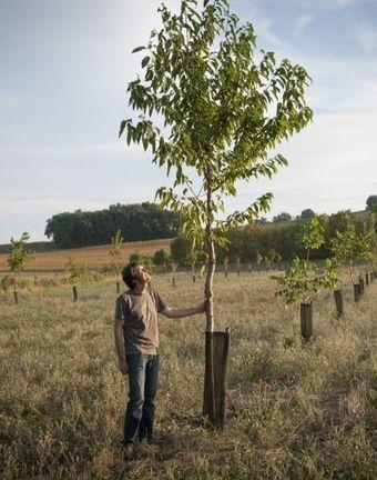 Pierre Pujos : « Le sol est mon premier outil de travail » - Ministère de l'agriculture, de l'agroalimentaire et de la forêt | agroforestery | Scoop.it