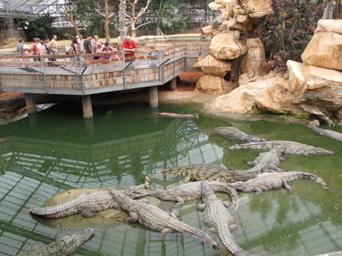 Tourisme : fréquentation en baisse à la Ferme aux crocodiles | Stations de ski, parcs de loisirs, bons plans | Scoop.it